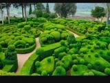 Фотография объявления Спил деревьев декоративная стрижка кустарника