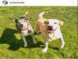 Фотография объявления Гостиница для собак Vavilon Электросталь