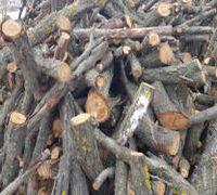 БЕСПЛАТНО ВСЕМ ! Отдадим совершенно бесплатно распиленные деревья на дрова! Клен, Тополь, и другие